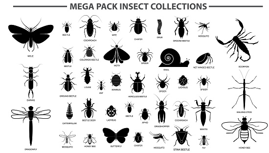 set of various insect in silhouette, with insect name.