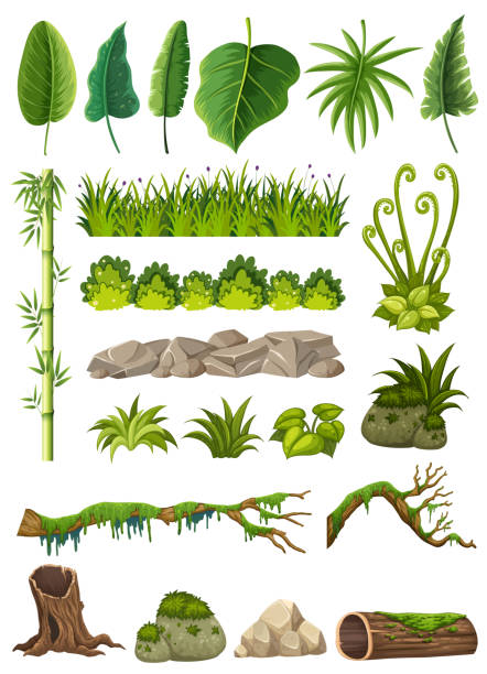 Set of various jungle objects Set of various jungle objects illustration moss stock illustrations