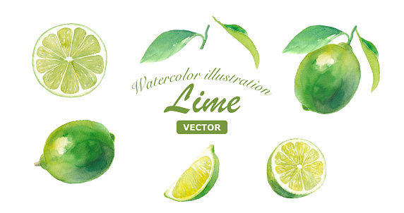 A set of various lime watercolor illustrations. With leaves, slices. (Vector data)