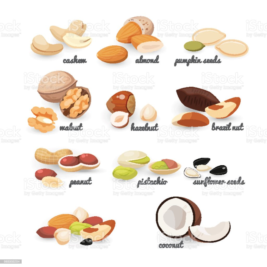 Set of various nuts and seeds, vector illustration vector art illustration