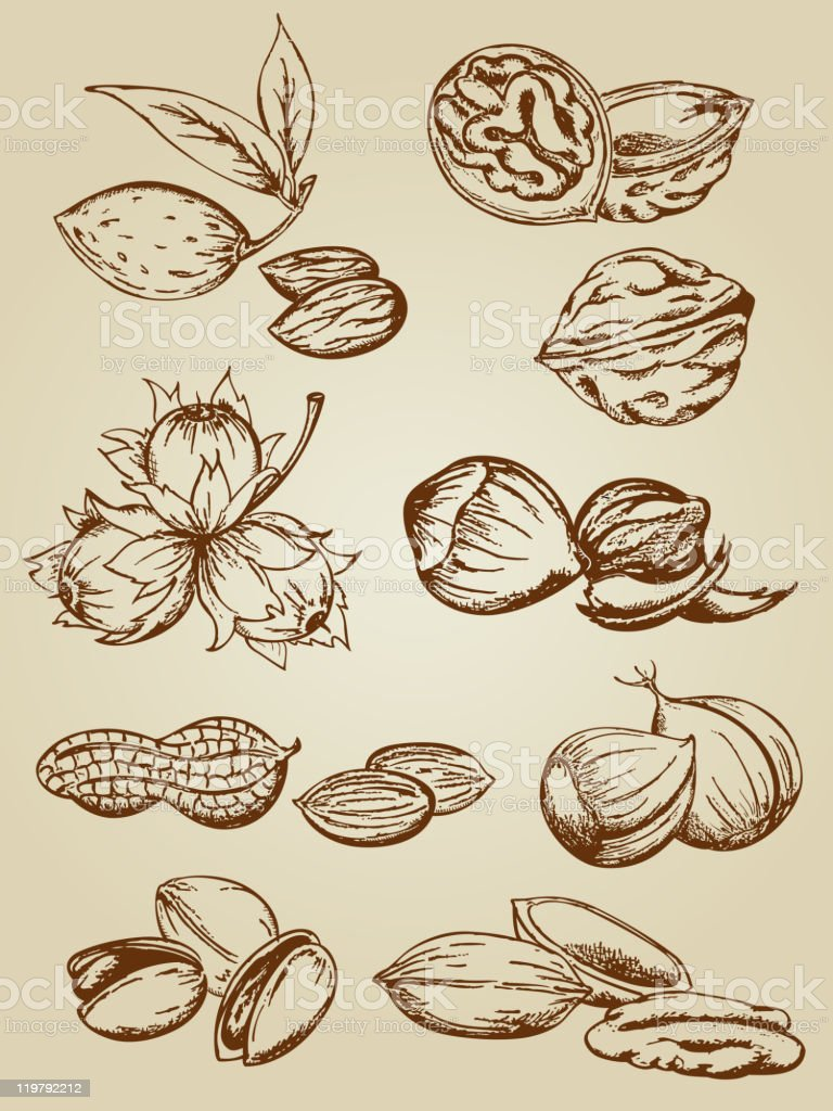 set of various nuts royalty-free stock vector art