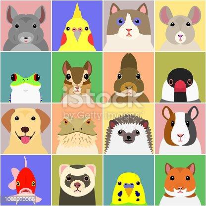 set of various pet animals face