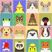 set of various pet animals face