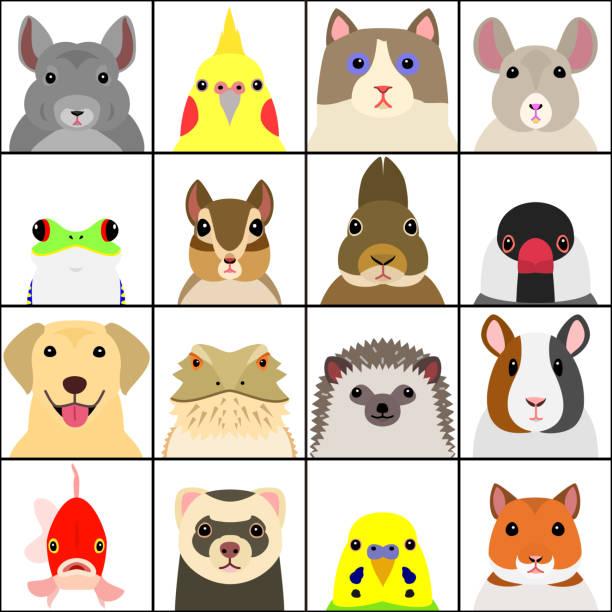reihe von verschiedenen heimtieren gesicht - igel stock-grafiken, -clipart, -cartoons und -symbole