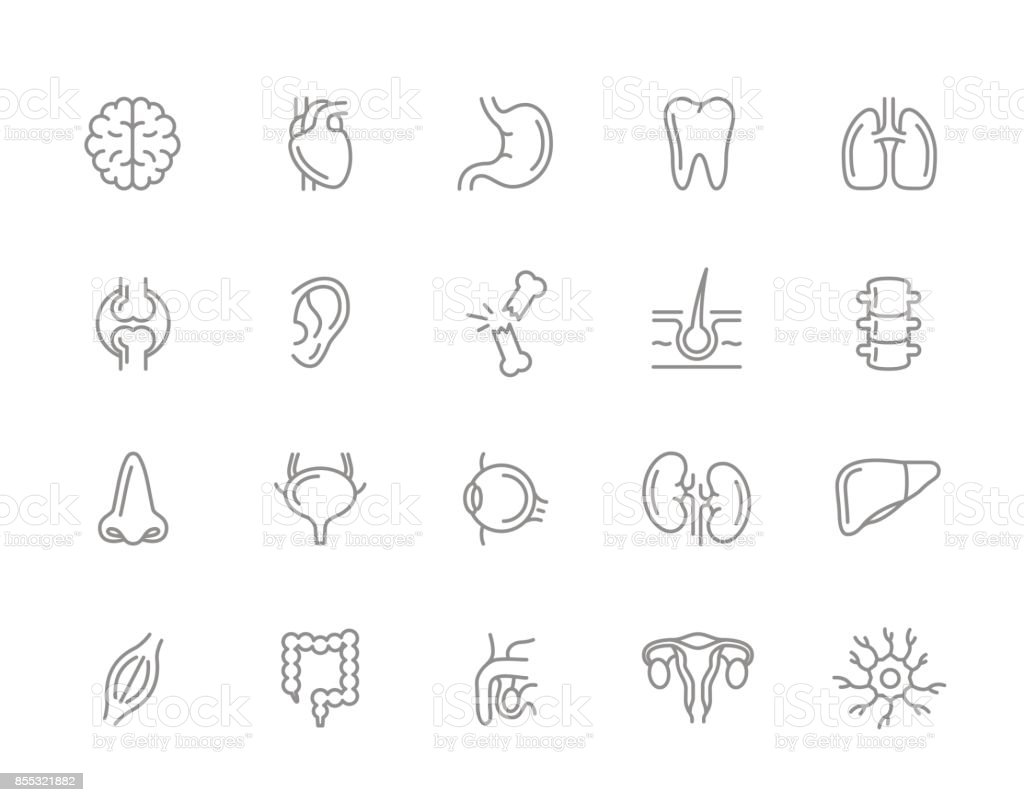 Ilustración de Conjunto De Iconos De Vector Anatomía Y órganos Línea ...