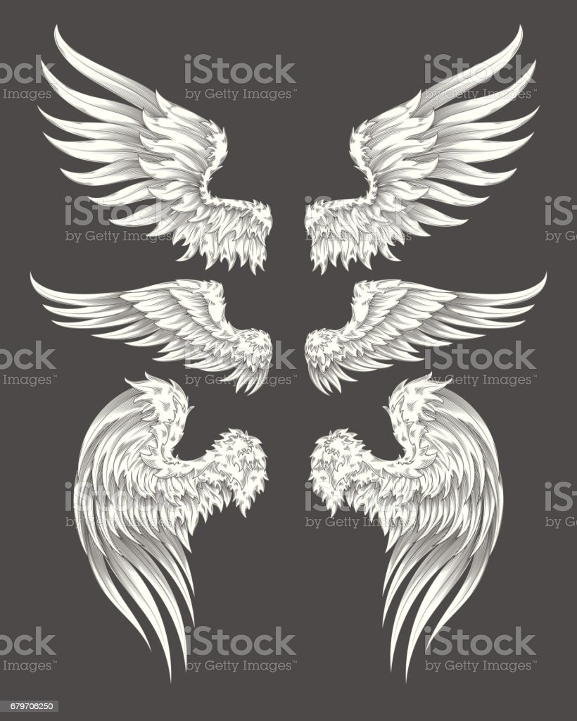 Set of vector angelic or bird wings vector art illustration