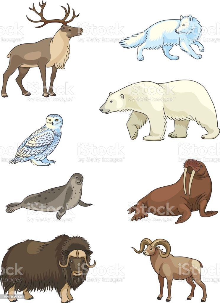 Set of vector Arctic animals vector art illustration