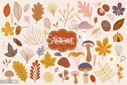 Set of vector autumn elements - acorn, daisy, fir needles, spruce branch, berry, flower, barberry, chestnut, mushrooms, amanita, cone, maple and oak leaves in scandinavian style