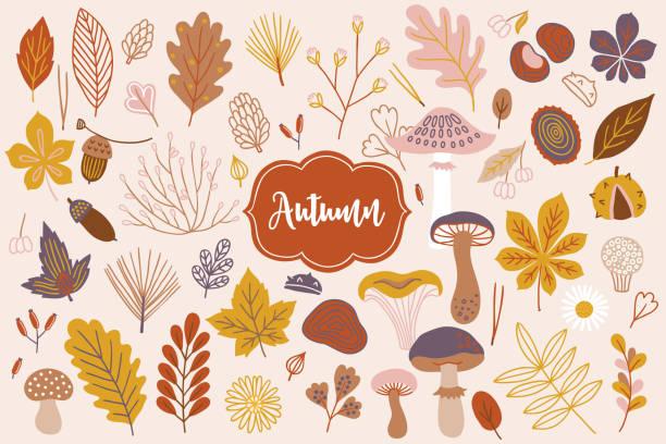 벡터 가을 요소의 집합 - 도토리, 데이지, 분기, 베리, 꽃 - 버섯 stock illustrations