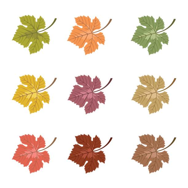Set Of Vector Autumn Leaves In Various Colors