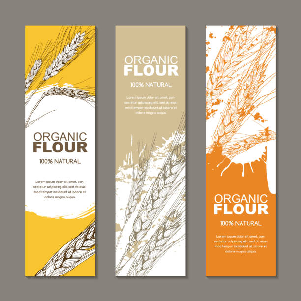 Set of vector backgrounds for label, package. Sketch hand drawn illustration of wheat ears. Agriculture, grain, cereal. vector art illustration