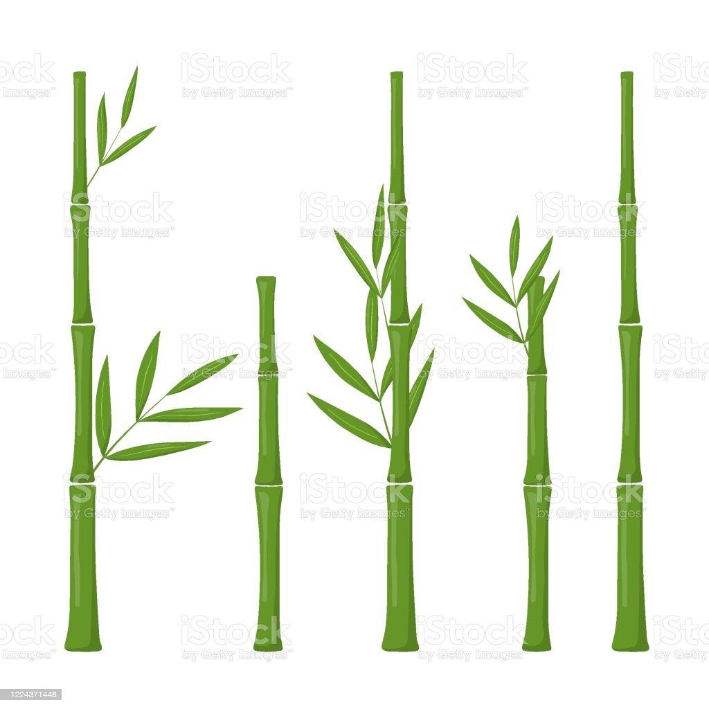 26+ Vector Bambu