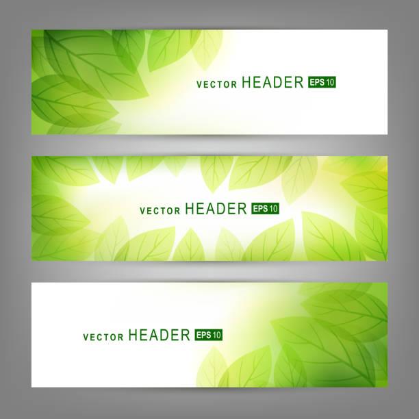 ilustraciones, imágenes clip art, dibujos animados e iconos de stock de conjunto de banners vector con hojas verdes frescas. primavera o verano naturaleza - fondos de hojas