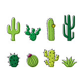 Collection of cacti, line drawing with colour. Fun cartoon doodle of cactus plants on white background. Desert plant, western and Mexican theme.