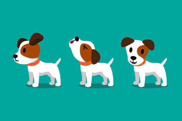 bildbanksillustrationer, clip art samt tecknat material och ikoner med uppsättning vektor tecknad figur söt jack russell terrier hund poser - valp