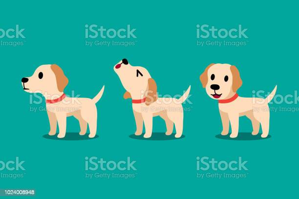 Set of vector cartoon character labrador dog poses vector id1024008948?b=1&k=6&m=1024008948&s=612x612&h=bzziykmvpmlnokzgdl1rjsny76ete0o1ug ql05hiqa=