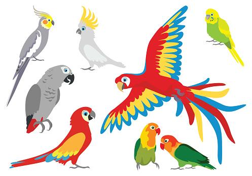 Set of vector cartoon colorful parrots in different poses. Jaco, cockatoos, wavy parrot, budgerigar, parrots are inseparable, lovebirds, Ara  Macaw, Corella.