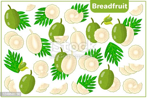 istock Set of vector cartoon illustrations with Breadfruit exotic fruits, flowers and leaves isolated on white background 1249535750