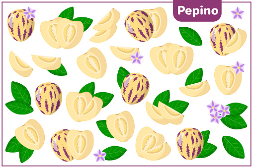 Set of vector cartoon illustrations with Pepino exotic fruits, flowers and leaves isolated on white background
