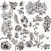 Big set or collection of vector hand drawn orchid flowers in engraved style
