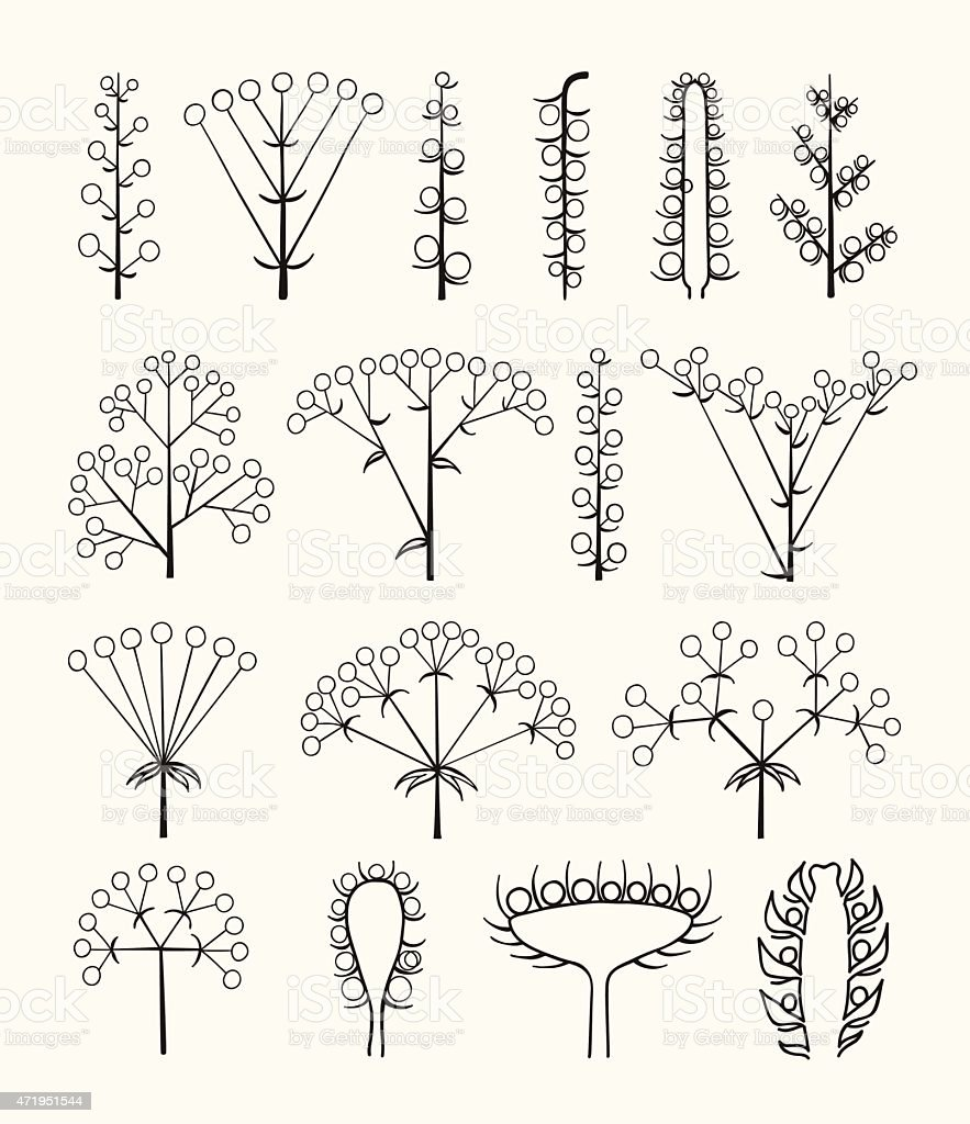 Set of vector different types of inflorescence isolated on white. vector art illustration