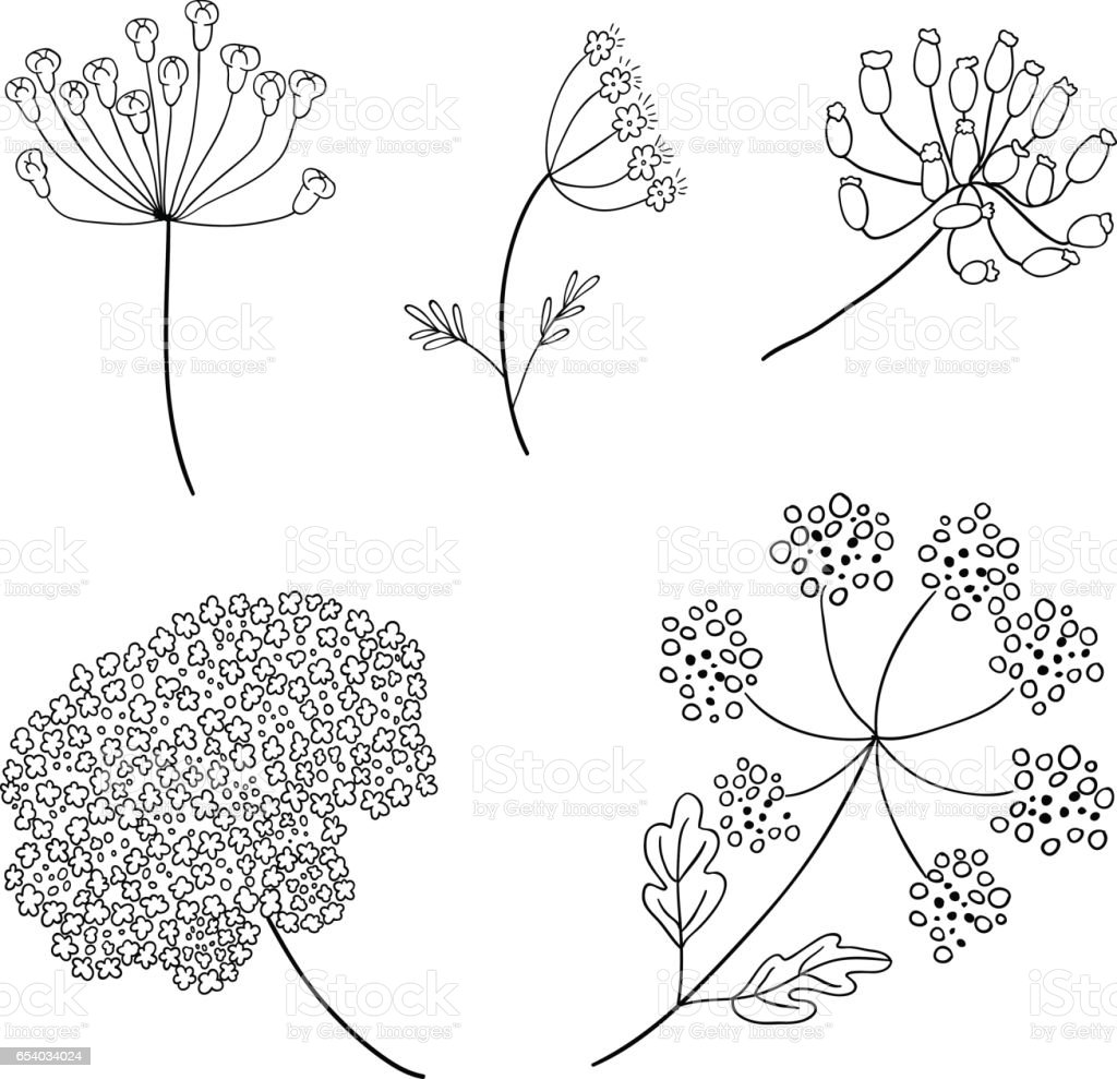 Set Of Vector Different Types Of Inflorescence Isolated On White