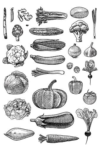 Set of vector drawings of vegetables