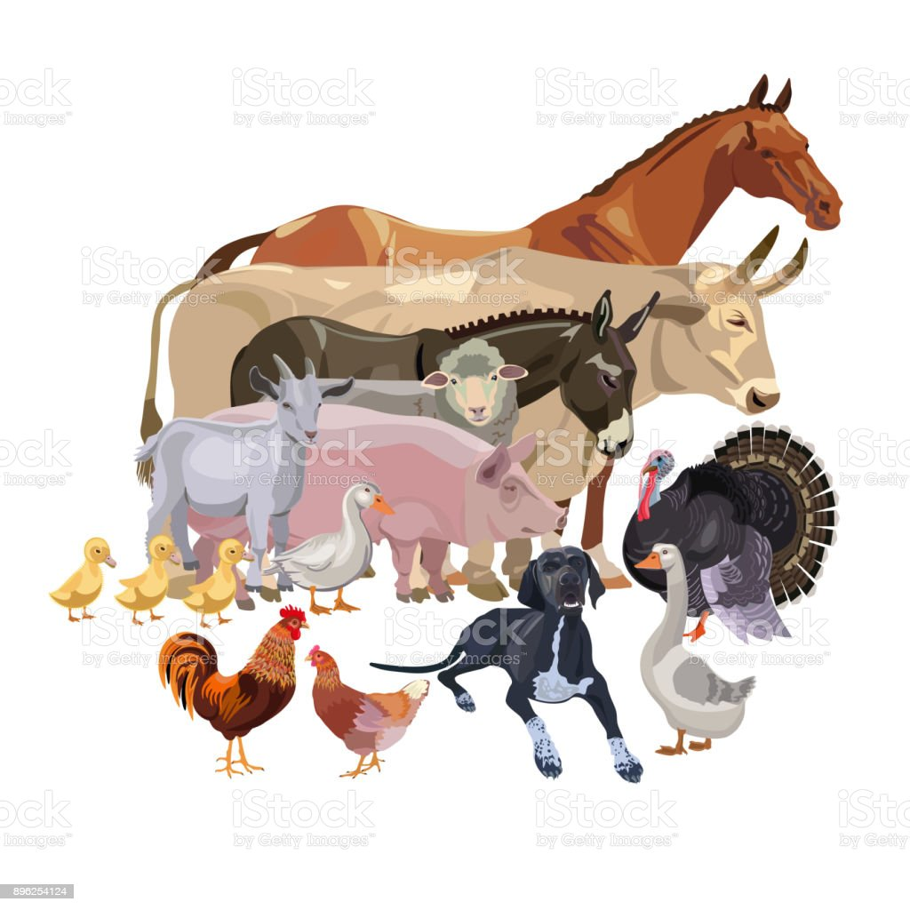 Ensemble d'animaux de ferme de vecteur - Illustration vectorielle
