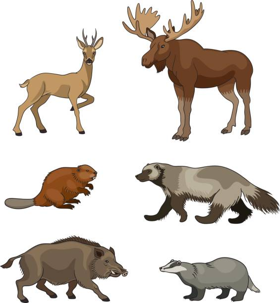 Set of vector forest animals Set of stylized vector forest animals. EPS8 moose stock illustrations