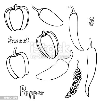 Set of vector hand drawn outline peppers. Black contour doodle illustration in line art style. Sketch of farm and garden vegetable. Isolated contour icon. Coloring book design element