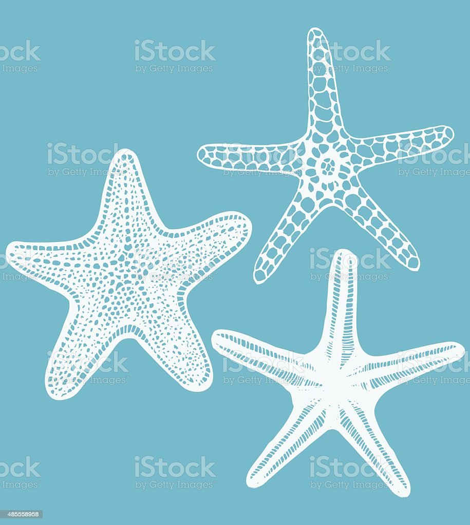 set of vector hand-drawn starfishes vector art illustration