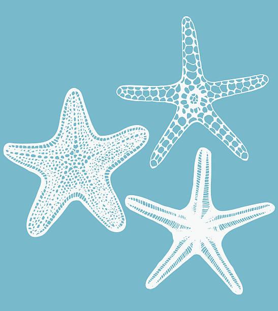 세트마다 벡터 hand-drawn starfishes - 불가사리류 stock illustrations