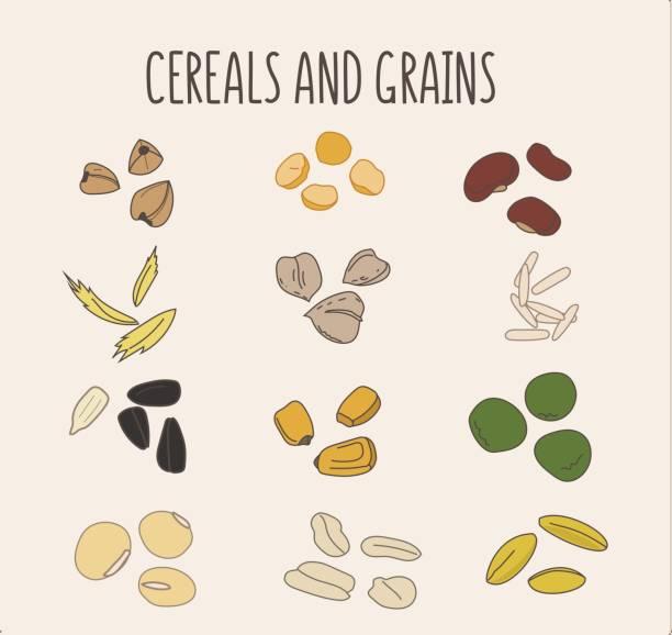 satz von vektor hand-ertrinken logo-elemente für gesunde ernährung, rohkost, vegetarier. korn und getreide. bohnen, mais, haferflocken, reis, soja, erbsen, sonnenblumenkerne, buckweat - dinkelbrot stock-grafiken, -clipart, -cartoons und -symbole