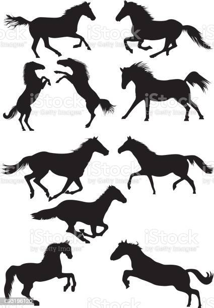 Set of vector horse silhouettes running galoping and jumping horses vector id693196120?b=1&k=6&m=693196120&s=612x612&h=x10p7x6ijuqwola vou7xurpxp qtxbi 77hpv4gnza=