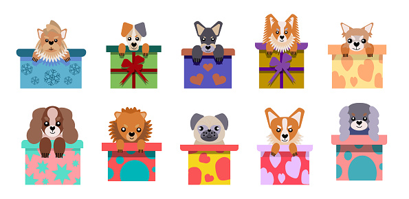 A set of vector icons of portraits of small dogs peeking out of the box, drawn in a flat style. Vector illustration in cartoon style. A toy dog. A puppy as a gift.