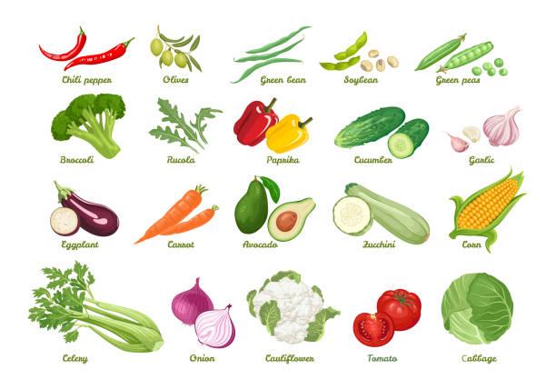 Set of vector icons vegetables. Set of vector icons vegetables. Chili, olive, bean, soybean, peas, broccoli, arugula, paprika, cucumber, garlic, eggplant, carrot, avocado, zucchini, corn, celery, onion, cauliflower, tomato, cabbage. garlic stock illustrations
