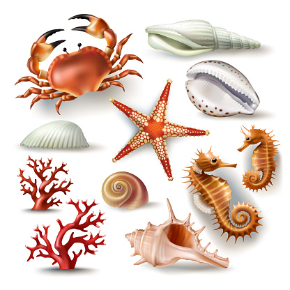 Set Of Vector Illustrations Seashells Coral Crab And ...