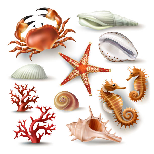 set of vector illustrations seashells, coral, crab and starfish - seashell stock illustrations, clip art, cartoons, & icons