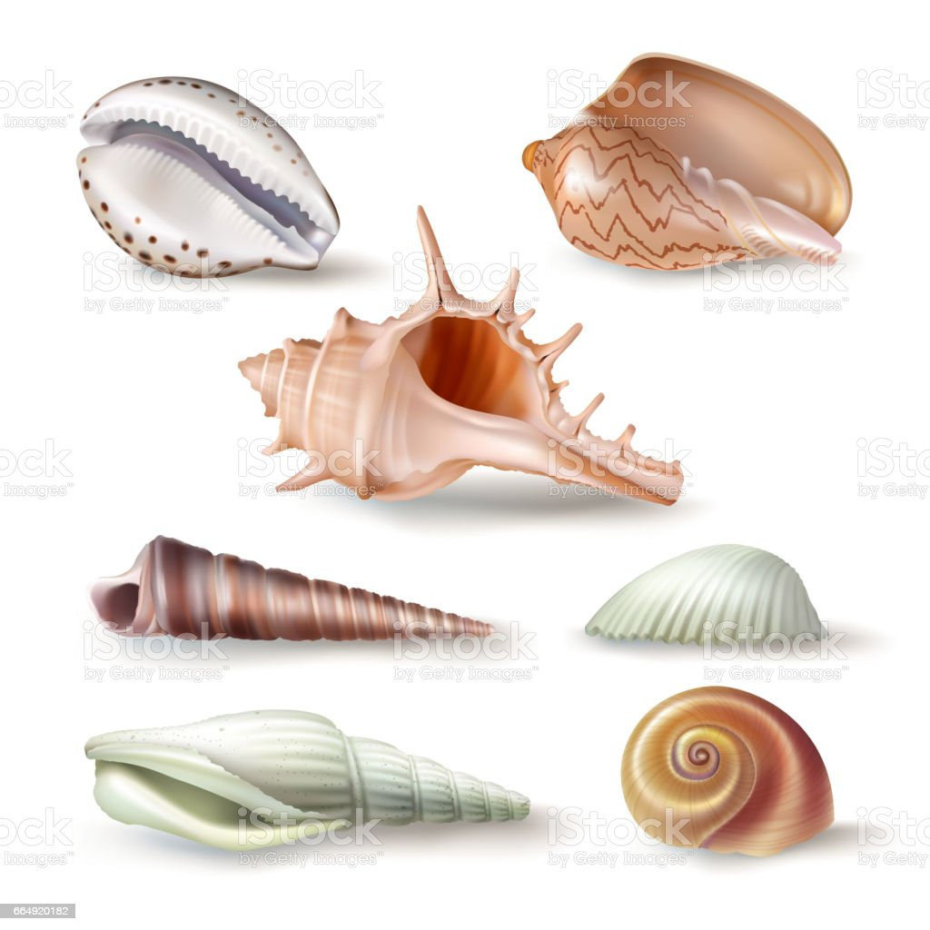 Set of vector illustrations seashells of various kinds in realistic style vector art illustration
