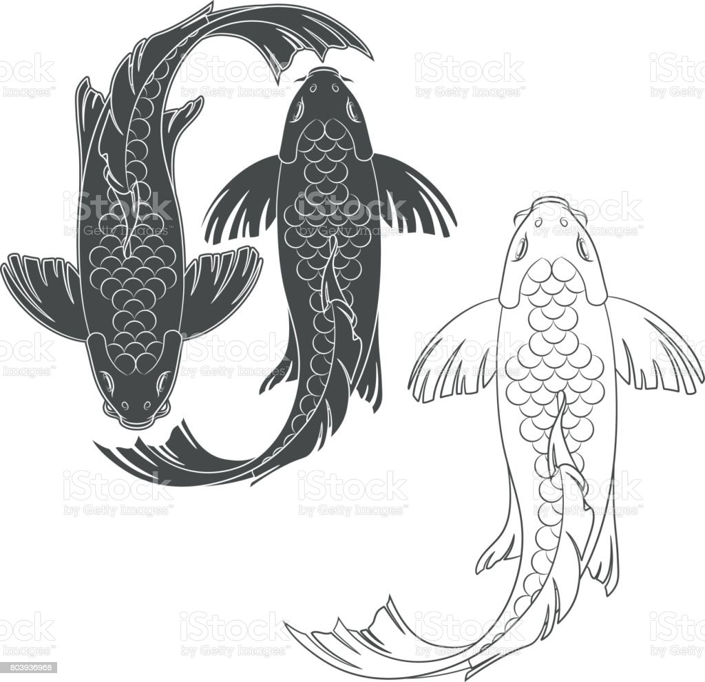 Set of vector illustrations with a mirror koi carp. Isolated objects. vector art illustration