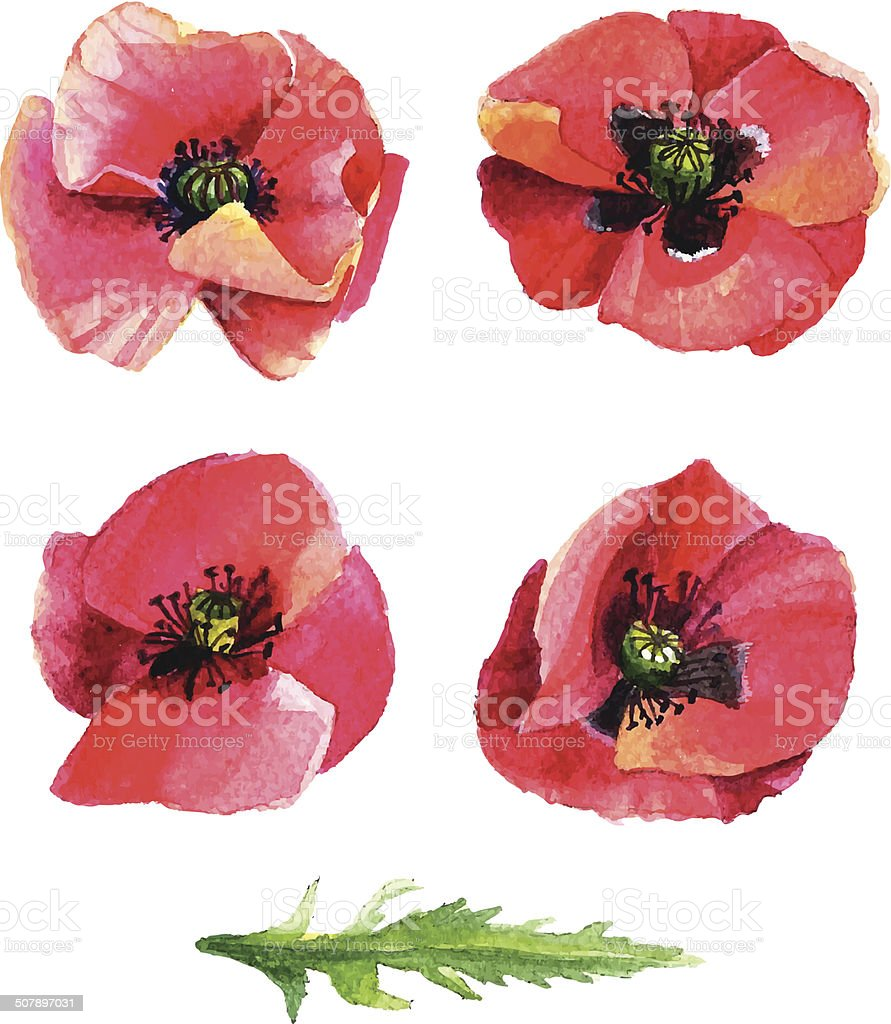 Set of vector images poppies. Watercolor style. vector art illustration