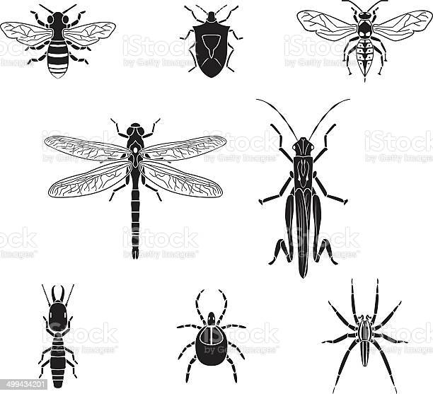 Set of vector insects volume 3 vector id499434201?b=1&k=6&m=499434201&s=612x612&h= ktlxoccozlupzhljxjuzxlwr2 j8ukcgdjd sycpak=