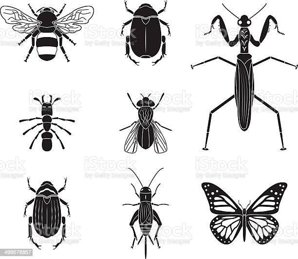 Set of vector insects volume 4 vector id499578857?b=1&k=6&m=499578857&s=612x612&h=8is d62bd63zg2cllkediwgpwg7ewzc1eu rvjhlabc=
