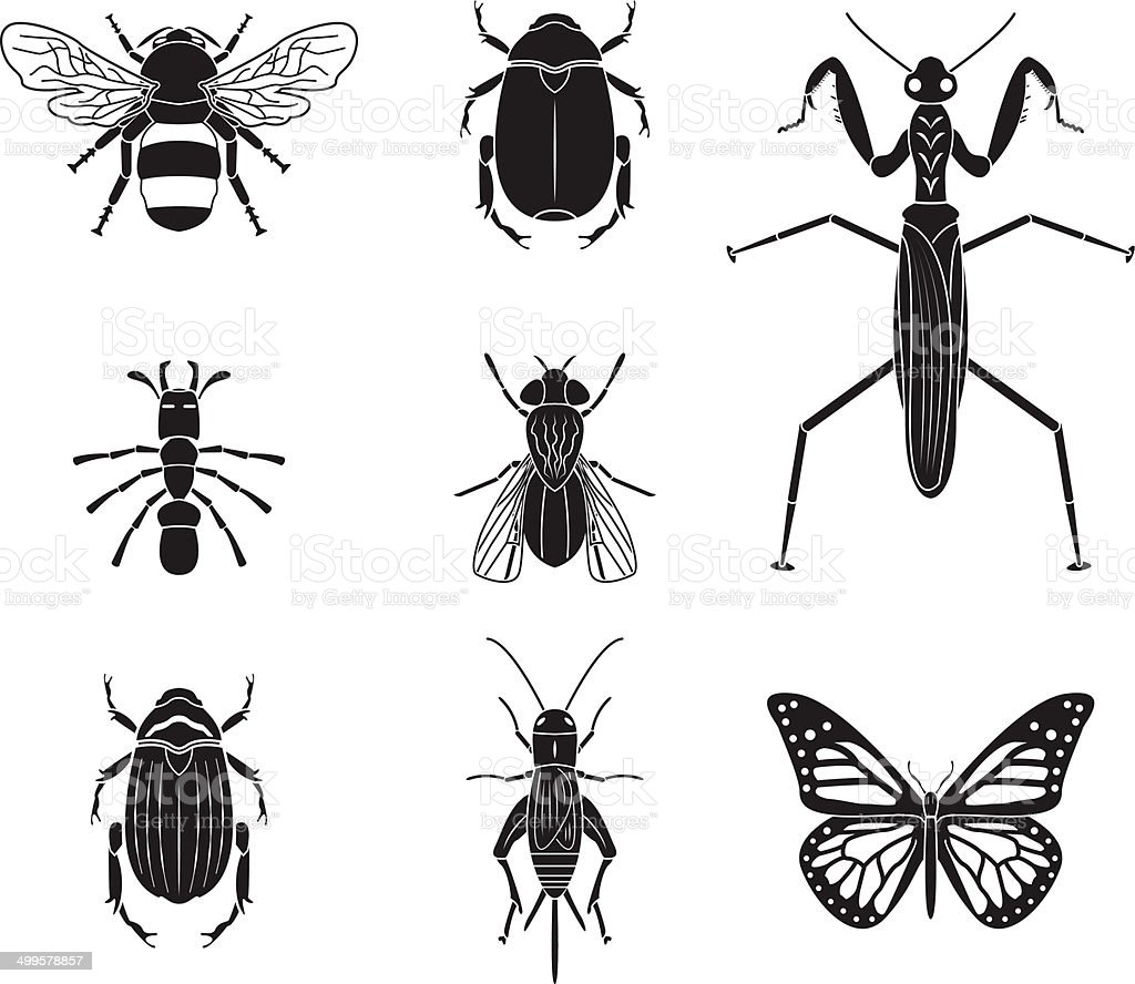 Set of vector insects volume 4 vector art illustration