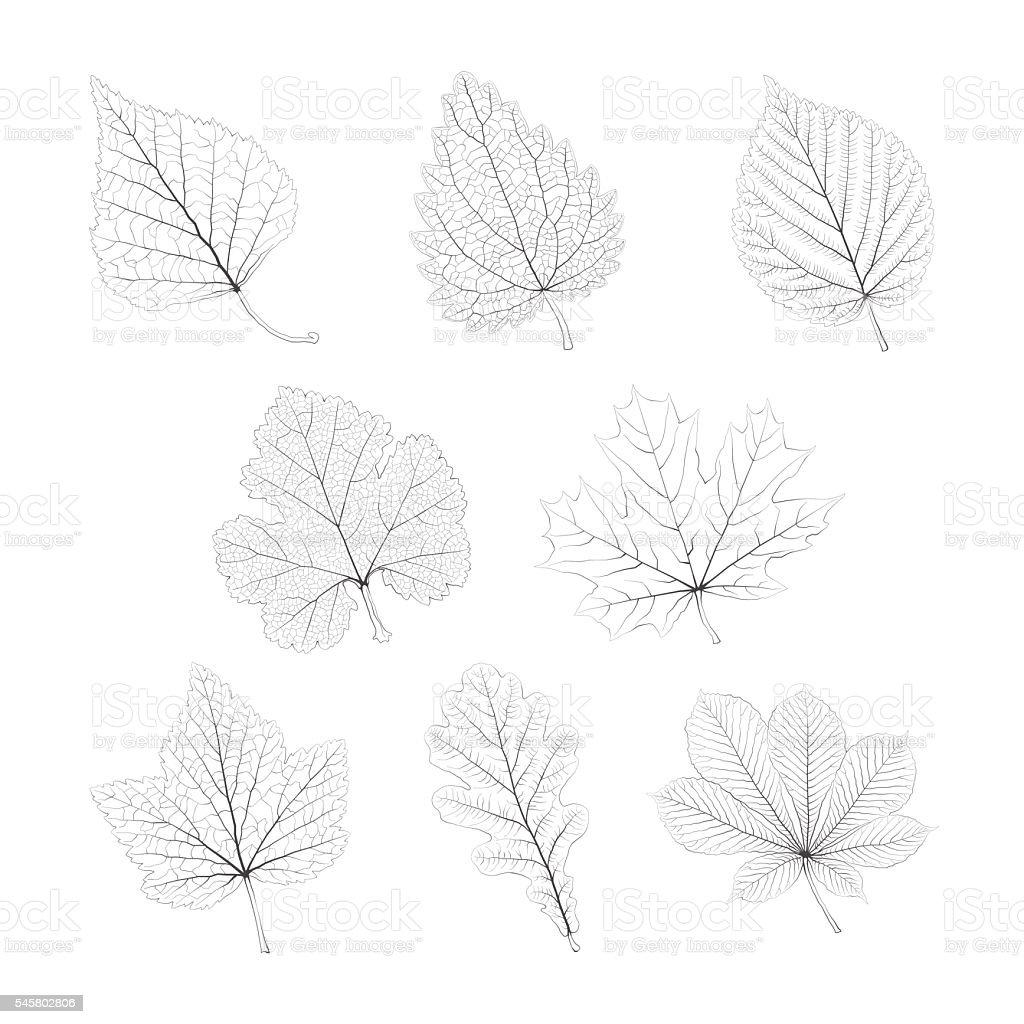 Set of vector isolated monochrome single leaves vector art illustration