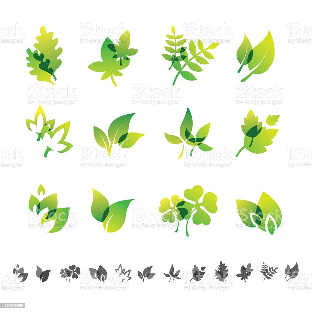 Set of vector leaves in front of white background vector art illustration