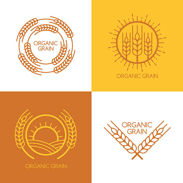 Set of vector linear wheat, fields logo design template. Set of vector linear wheat, fields logo design template. Abstract concept for organic products, harvest, grain, bakery, healthy food. bread borders stock illustrations