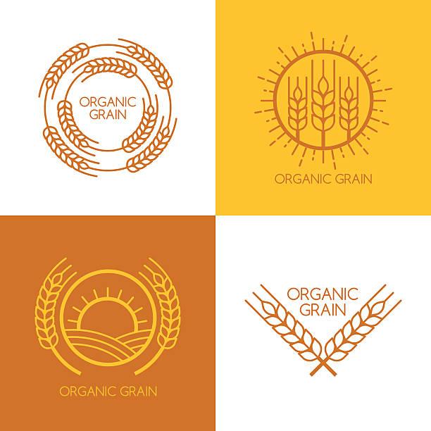 Set of vector linear wheat, fields logo design template. vector art illustration