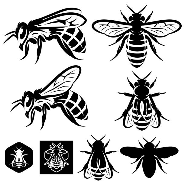 Bекторная иллюстрация set of vector monochrome templates with bees of different kinds.