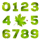 Set of vector numbers made from green leaves, isolated on white background